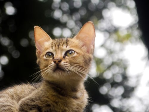 Fotos de stock gratuitas de animales y mascotas, beatuifulbackgorund, gatito, gatitos