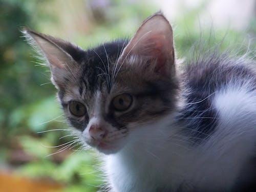 Fotos de stock gratuitas de fondo de pantalla, gatito, gato, hola gatito