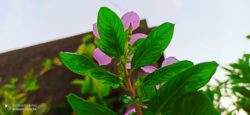 綠色, 花, 花卉 的 免费素材图片