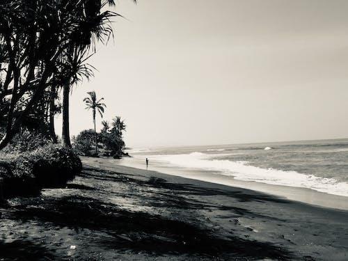 Free stock photo of alone, beach, black and white
