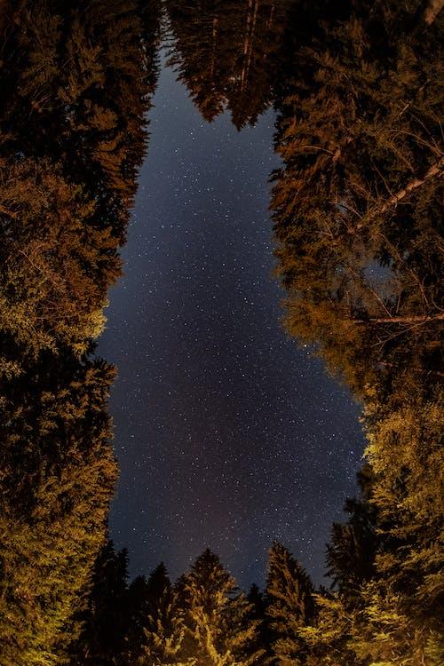 Základová fotografie zdarma na téma alberi di notte, albero di notte, bosco