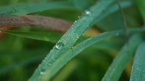 Free stock photo of blatt, drops, green, grün