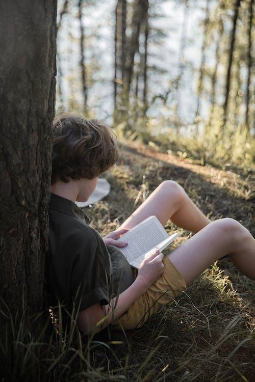 Fotos de stock gratuitas de al aire libre, árbol, bonita, caer