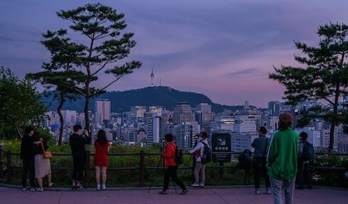 Δωρεάν στοκ φωτογραφιών με Κορέα, νάκσαν, Σεούλ, ταξίδι