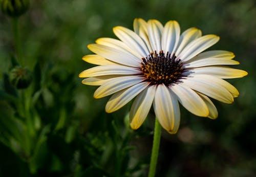 Ilmainen kuvapankkikuva tunnisteilla kartio kukka, keltainen, keltainen kukka, kesäkukka