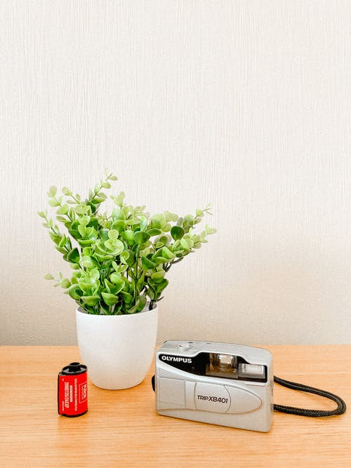 Retro camera near plant on table