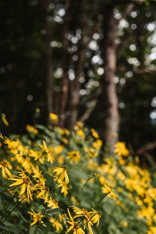 Free stock photo of blue ridge parkway, daisy, flower meadow