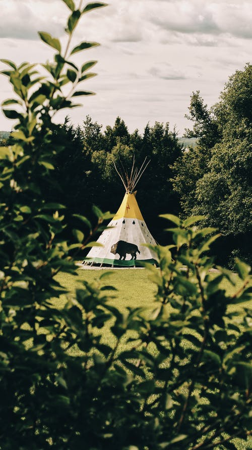 Tent on Green Grass Field Surrounded by Trees