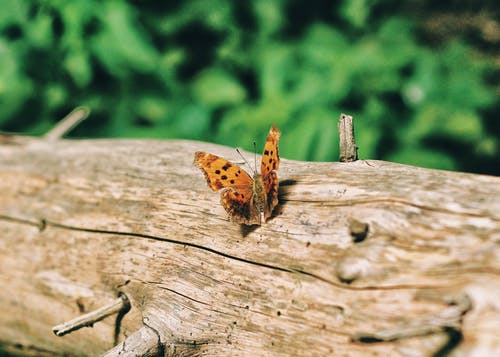 Brown Butterfly on Log