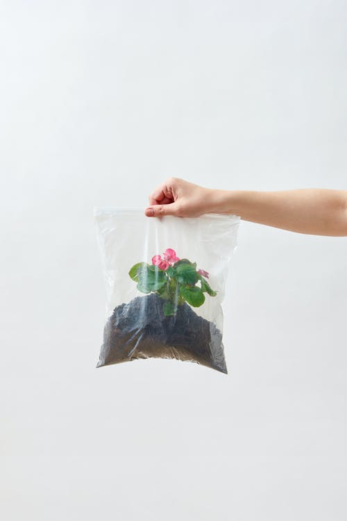Person Holding A Plant Inside A Plastic Bag