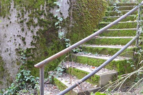 Free stock photo of climb, concrete stairs, green moss, railing