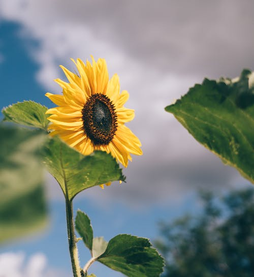 Gratis stockfoto met aroma, biologisch, blad