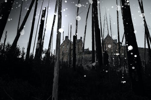 Free stock photo of castle, creative, dark, forest