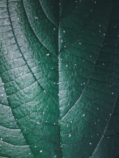 Abstract background of green leaf with veins and stripes