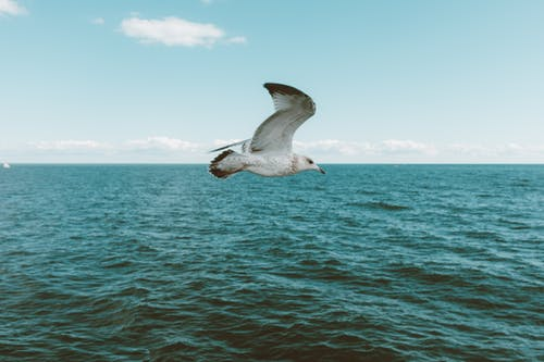 Seagull flying over endless blue ocean