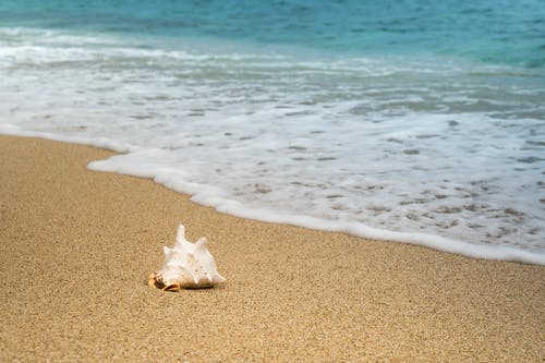 Single shell placed on smooth sand and clear blue calm sea with small foamy wave in sunny day