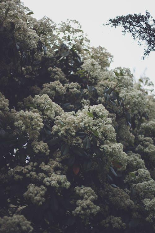 Ilmainen kuvapankkikuva tunnisteilla kukinta, kukkiva puu, luonto, puu