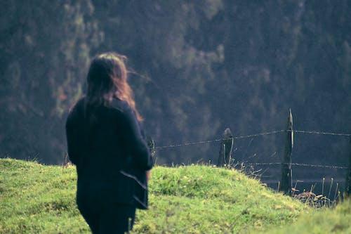 Free stock photo of green mountains, mountain, trees