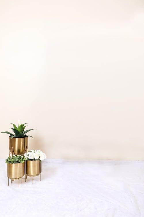 Fotos de stock gratuitas de #plantas, adentro, árbol, celebración