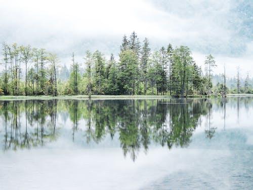 Green Trees Beside Body of Water Under White Sky