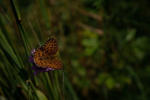 Brown Butterfly Perched on Purple Flower in Close Up Photography