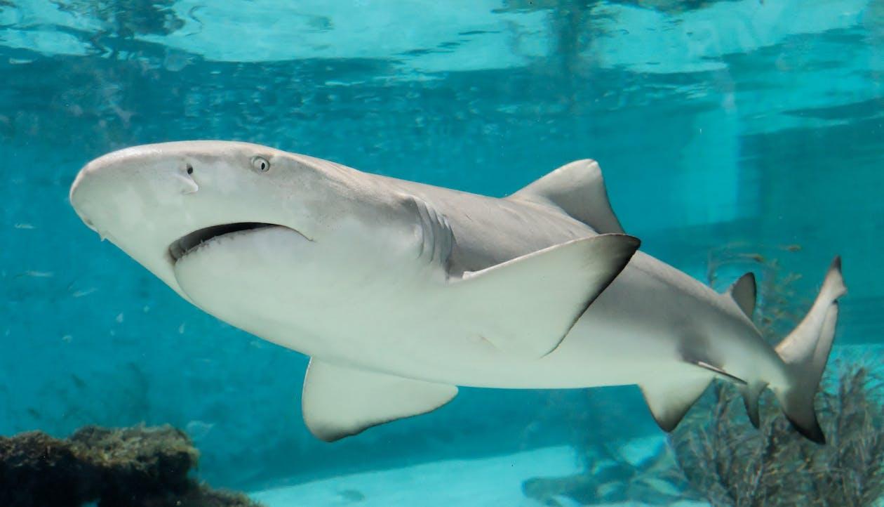 Fotos de stock gratuitas de acuario, agua, aleta