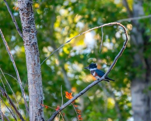 Бесплатное стоковое фото с дерево, дикая природа, дикий, животное