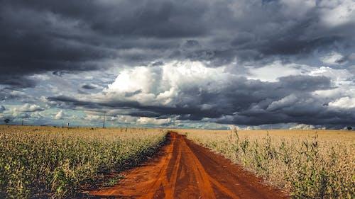Dirt trail running along green agricultural plantations
