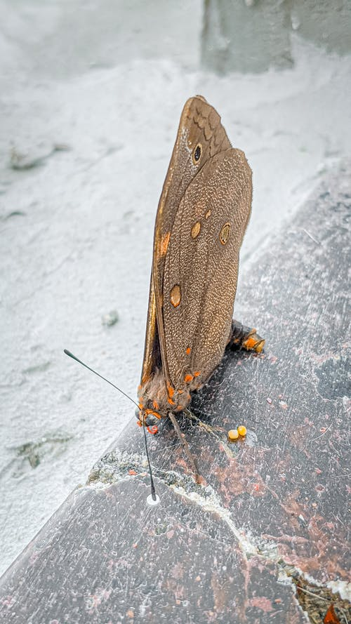 From above brown big owl moth sitting with wings folded on marble surface in daylight