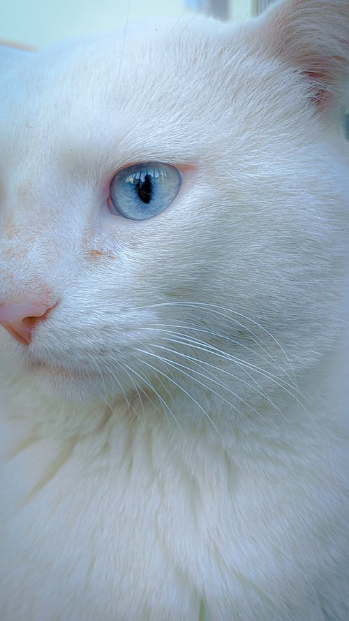 Muzzle of cat with blue eye and whiskers