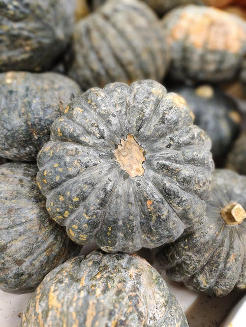 From above of heap of ripe pumpkins with blots on ribbed peel in daylight