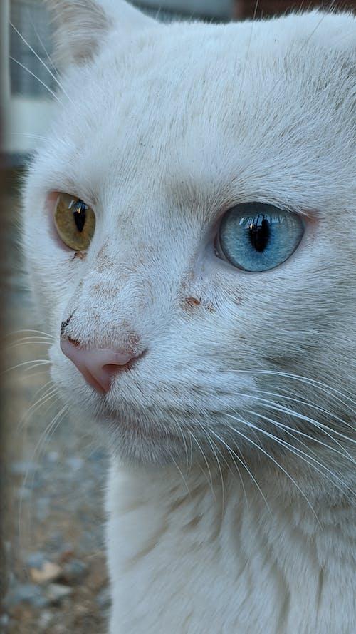 Street cat with dreamy gaze on pavement
