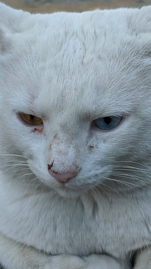 Muzzle of cute white cat with dirty fur
