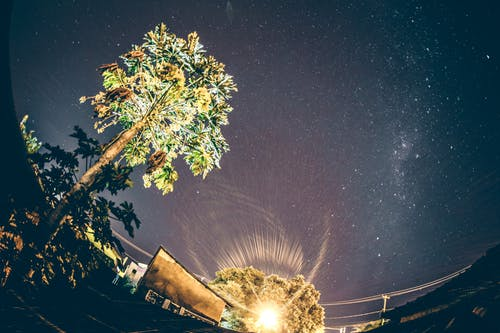 Wide angle of green trees growing near small settlement against picturesque starry night sky with Milky Way galaxy