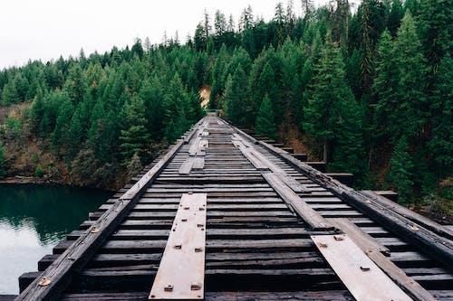 Darmowe zdjęcie z galerii z drzewa, las, most