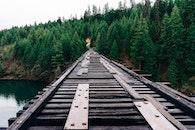 forest, bridge, trees