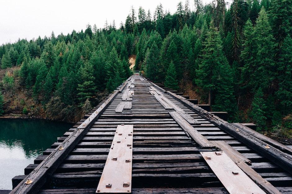 bridge, forest, trees