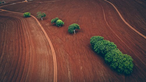 Green trees growing on agricultural field