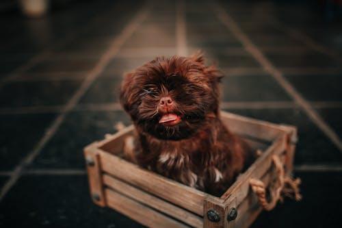 おもしろい, ヘア, ペット, ミニチュアの無料の写真素材