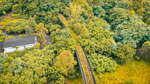 Drone view of colorful trees in forests near building and aged bridge in fall