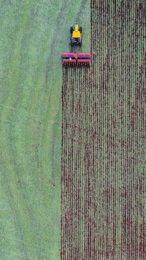 Combine harvesting crop on verdant field