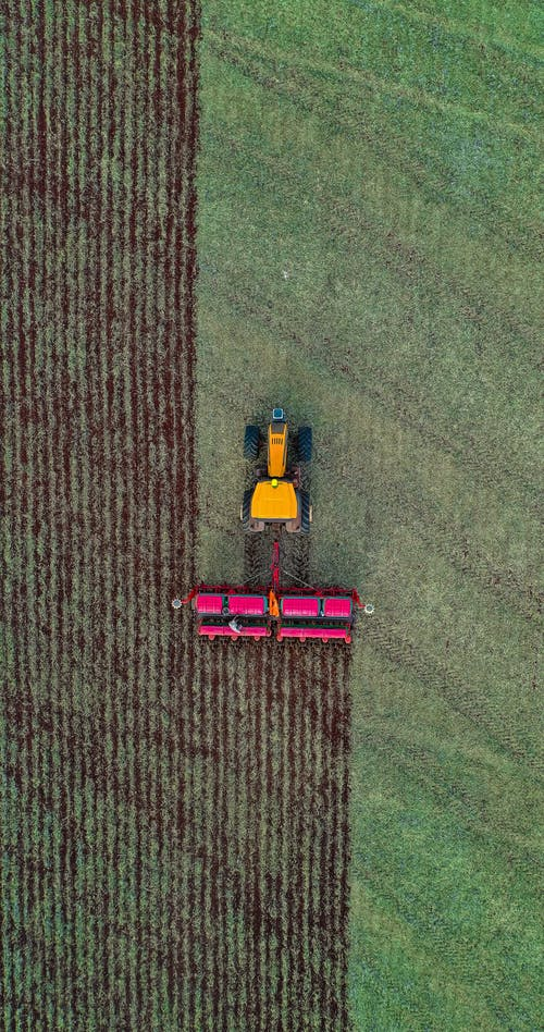 Aerial view of combine harvesting ripe wheat in agricultural plantation in farm in countryside