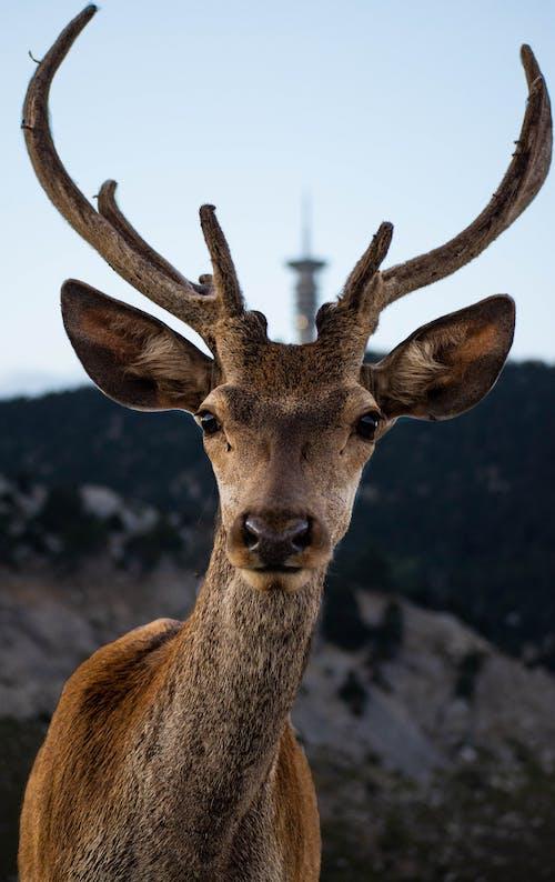 Brown Deer Standing on Gray Rock
