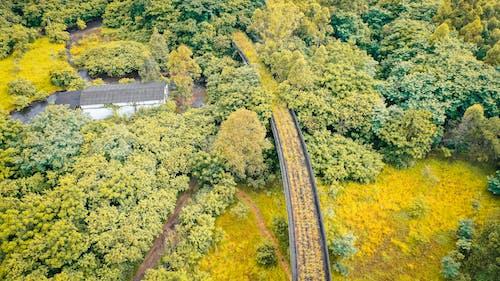 Green grassy field near trees under bridge