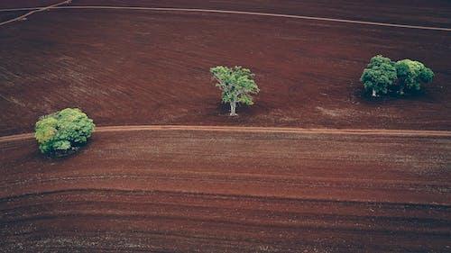 Kostenloses Stock Foto zu ackerland, agronomie, baum