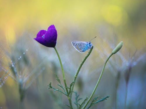 Violet flower growing in field