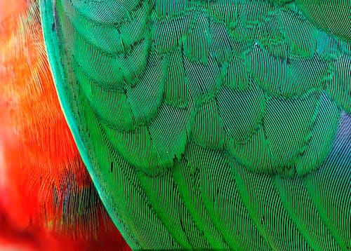 Green and Orange Bird Feather