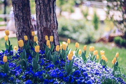 Blooming tulips growing near tree