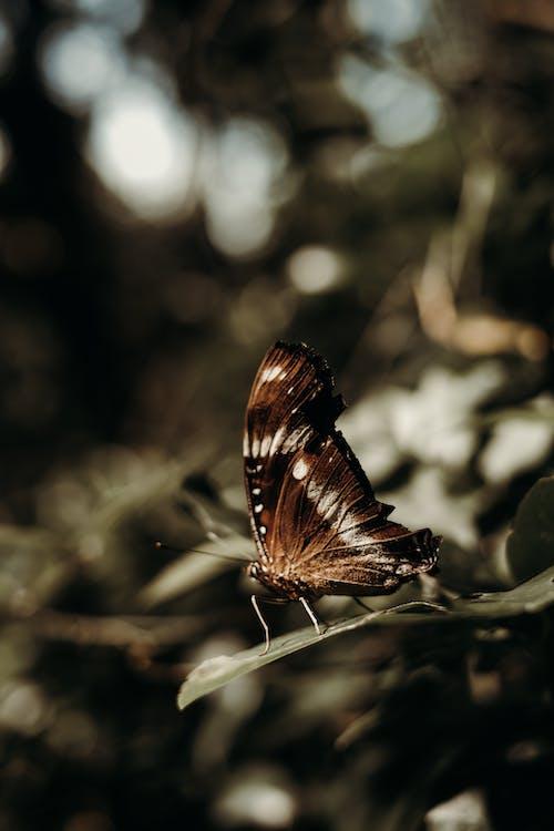 Foto d'estoc gratuïta de a l'aire lliure, ala, ales, animal