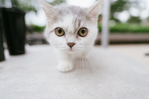 White Cat on White Floor